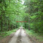 El bosque de Bialowieza en Polonia. Que hacer en el bosque de Bialowieza