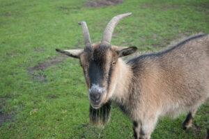 Nuestra visita al zoo de Kadzidlowo en la remota Masuria
