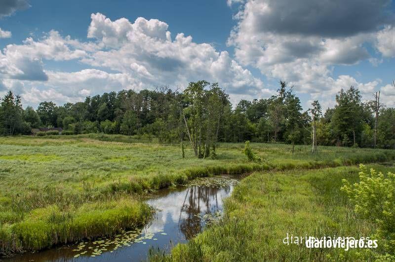 El bosque de Bialowieza en imágenes