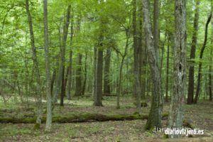 Una ruta de ciclismo en el bosque de Bialowieza